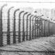 L'enseignement de l'Holocauste : bâtir un pont critique entre notre compréhension de l'histoire et notre empathie.