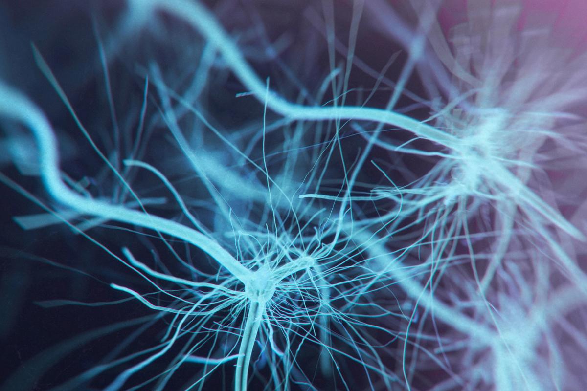 L'ARN et le cerveau
