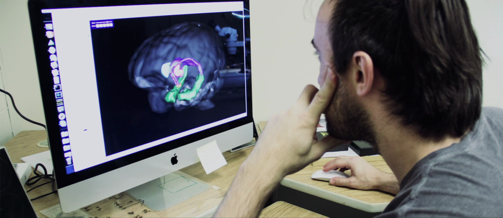Man studies 3D image of the brain on a computer for research.