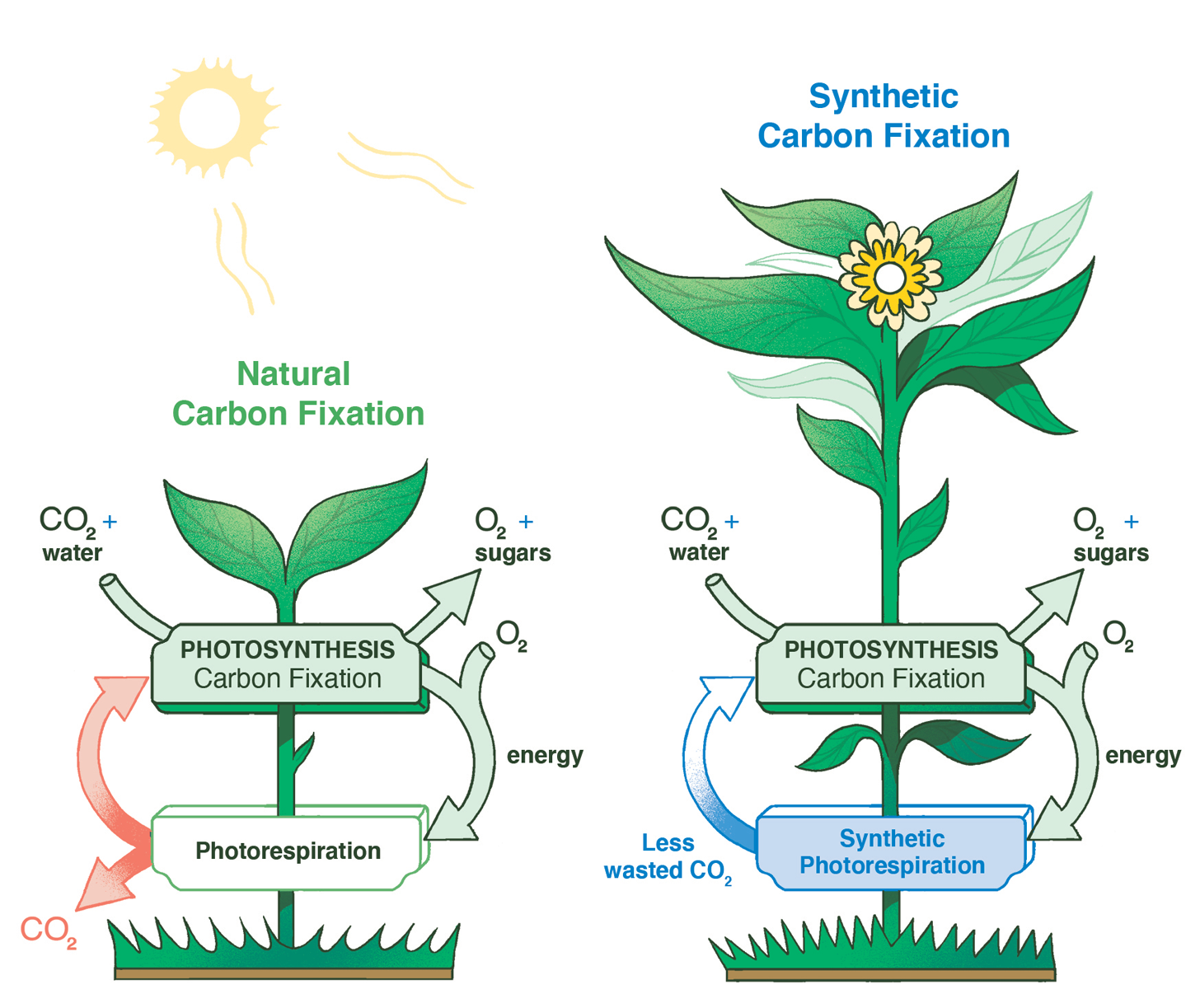 Comparison of natural and synthetic carbon fixation